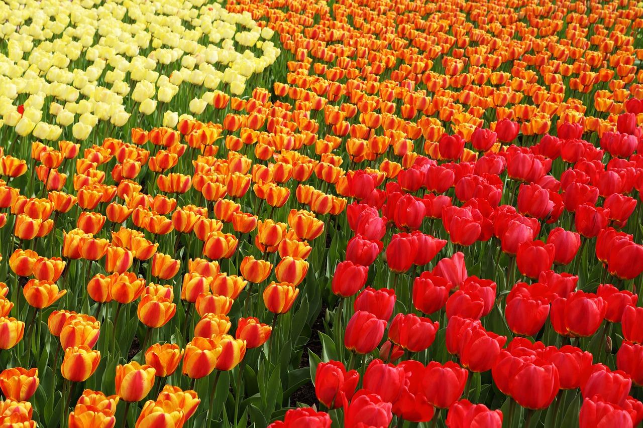 Flower, Many