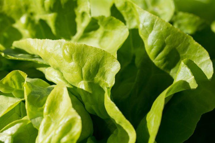 Green,,, Food